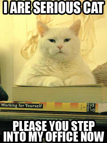 Random Funny Pictures Thread:) Serious-cat
